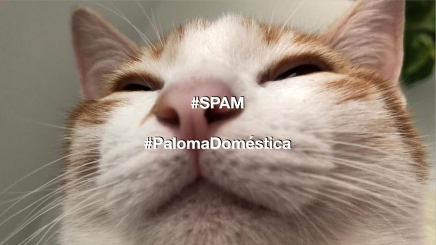 Gato de Paloma Domestica en SPAM